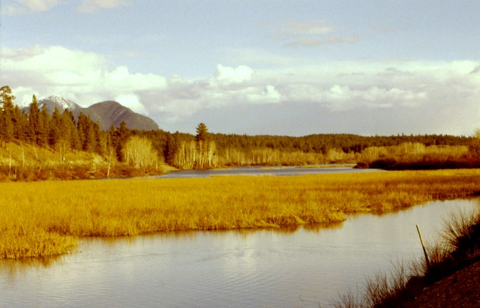 Wetlands in the Columbia Valley, British Columbia